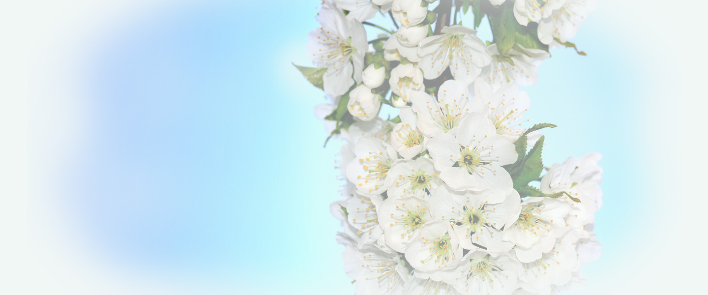 spring cleaning tw banner